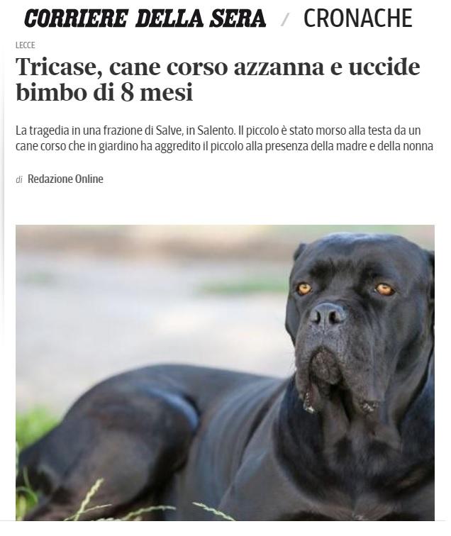 cani mordono
