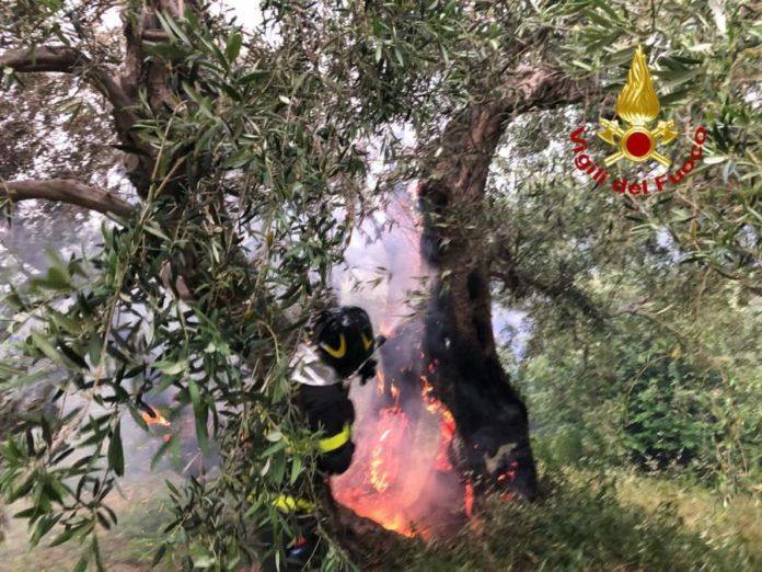 vigili del fuoco intenti a domare un incendio